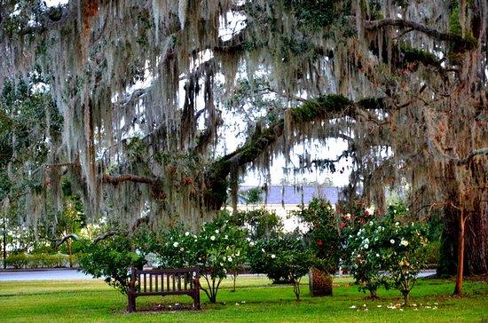 Saint Simons Island, GA: A beautiful place to rest