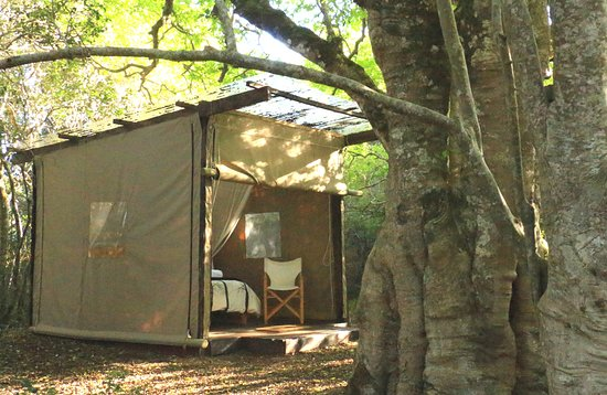 Platbos Forest Camp