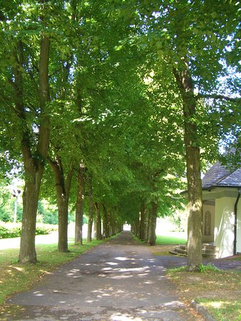 Bad Mergentheim, Alemania: Baumallee im Kurpark