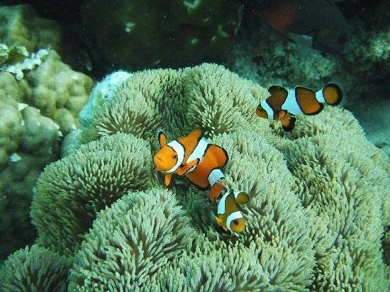 Islands View Inn: This was from my guests who found Nemo.