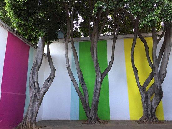 Museo de Arte Contemporaneo de Oaxaca (MACO): MACO courtyard