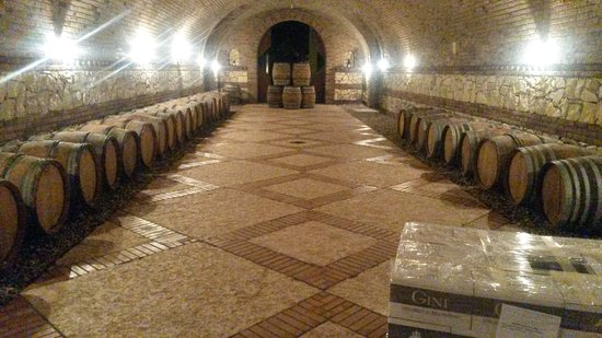 Monteforte d'Alpone, Italy: Gini winery cellar