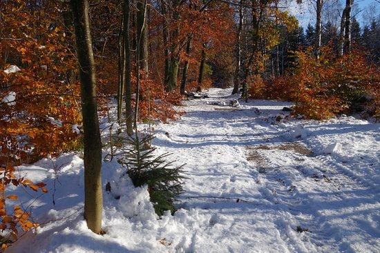 Lund, Sverige: 5 km-spåret en solig vinterdag