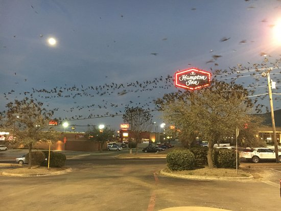 Killeen, TX: 10's of thousands of birds roost in the parking lot