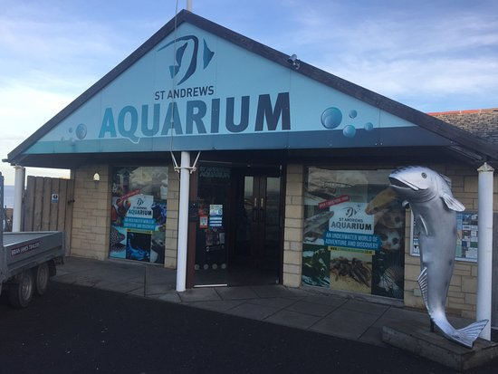... do. :0D - Foto van St Andrews Aquarium, St. Andrews - TripAdvisor