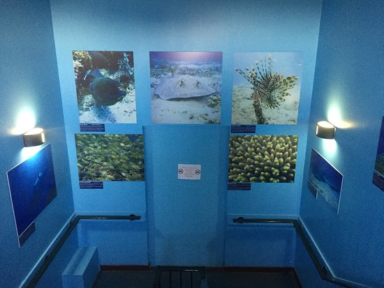 ... do. :0D - ?????St Andrews Aquarium??? - TripAdvisor