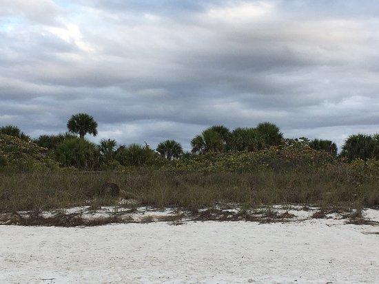 Barefoot Beach Preserve: photo1.jpg