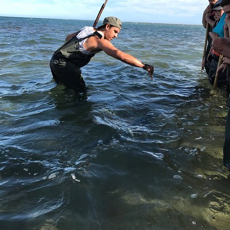 Best ever experience of close encounter with wild animals...Dive Tatapouri, Gisborne