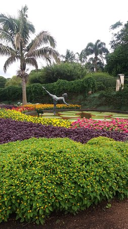 Nova Odessa, SP: Lindas flores