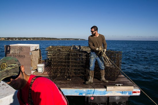 Cottage city oyster farm tour oak bluffs ma top tips for Martha s vineyard fishing charters