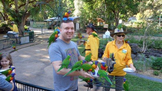 Currumbin, ออสเตรเลีย: Lorikeet feeding.