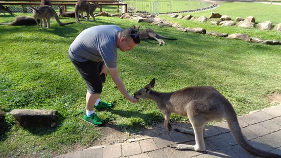 Currumbin, Australia: Kangaroo feeding. Yes, I know the haircut was a bad choice.