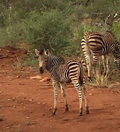 Obraz Madikwe Game Reserve