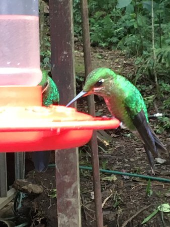 Reserva Biológica Bosque Nuboso Monteverde, Costa Rica: photo4.jpg