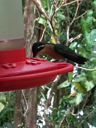 Reserva Biológica Bosque Nuboso Monteverde, Costa Rica: photo7.jpg