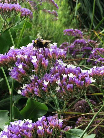 Royal Tasmanian Botanical Gardens: photo2.jpg