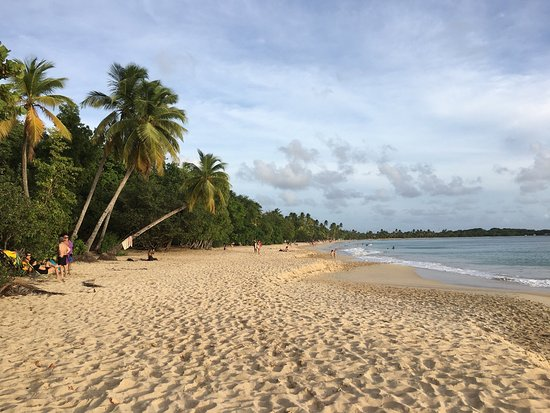 Sainte-Anne, Martinique: Grande Anse des Salines! Wonderful!