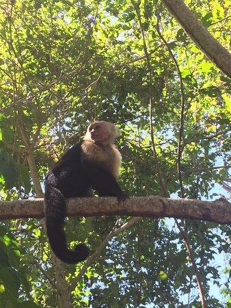 Cahuita, Costa Rica: photo8.jpg