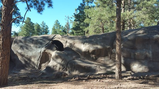 Williams, AZ: One of many brown bears inside there habitat area