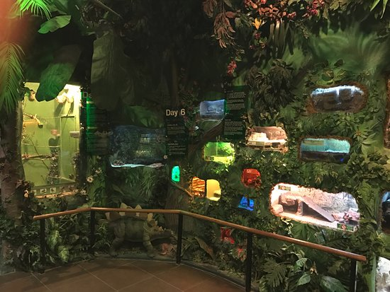 Days Of Creation De Ed Picture Of Creation And Earth History Museum Santee Tripadvisor