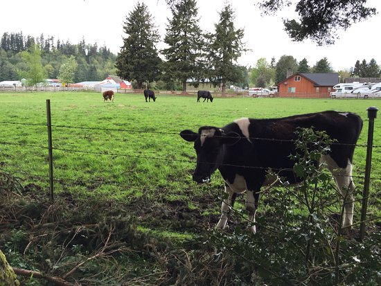 KOA Campgrounds: Neighbours Friendly Cow