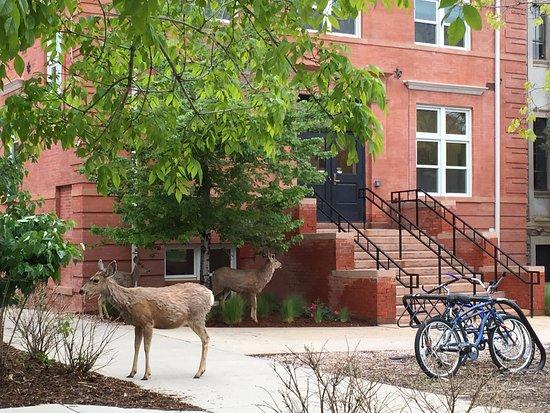 Boulder, CO: deer often roam around campus