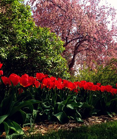 Boulder, CO: landscaping in the Spring