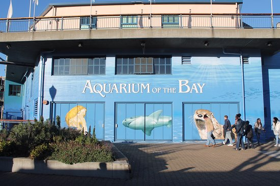 Right On Pier 39 Picture Of Aquarium Of The Bay San