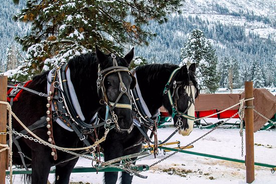 Leavenworth, WA: Our two wonderful horses for our ride