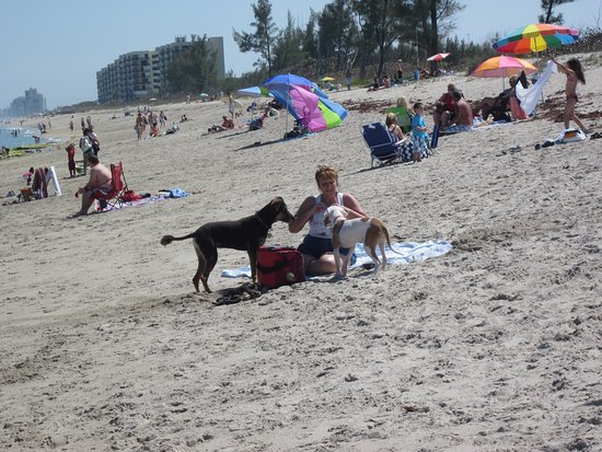 Port Saint Lucie, Floryda: Dogs love to play here