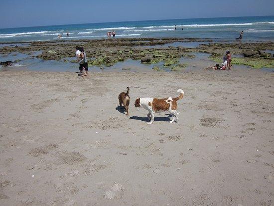 Port Saint Lucie, FL: some of bendys friends