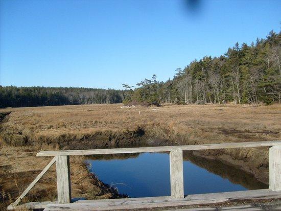 Phippsburg, ME: the bridge at the beginning of the hike