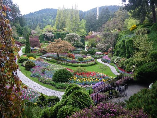 Butchers Gardens In Spring Picture Of The Butchart Gardens Central Saanich Tripadvisor