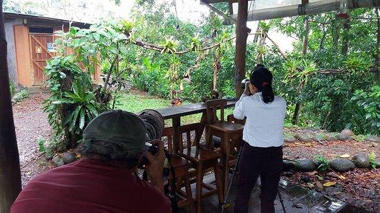 La Virgen, Costa Rica: Toucans and hummingbirds