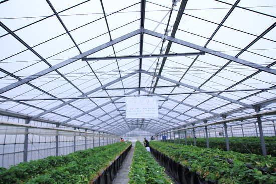 Kawatsura Strawberry Farm