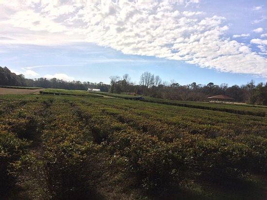 Остров Вадмалав, Южная Каролина: photo1.jpg