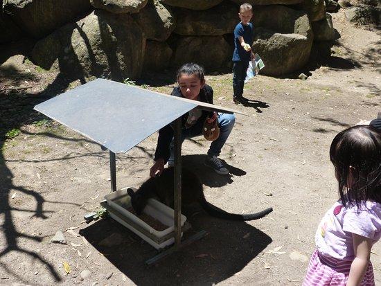Healesville, Australia: Mis hijas interactuando con los animales paea ellas desconocidos