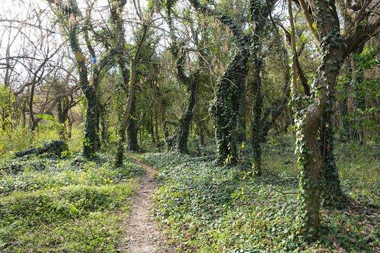 Bell Ville, Argentina: Reserva Francisco Tau