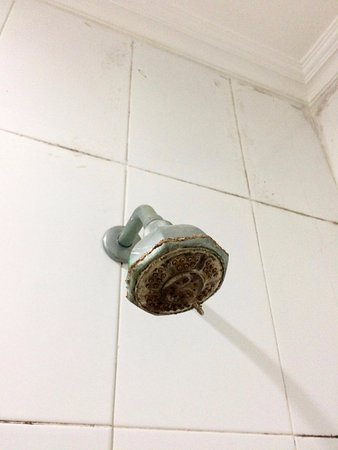 Hotel Orlen: This shower head is one small example of the hotel quality.