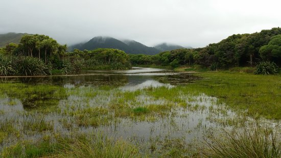 Paekakariki, New Zealand: Wetlands on the walk from the memorial.