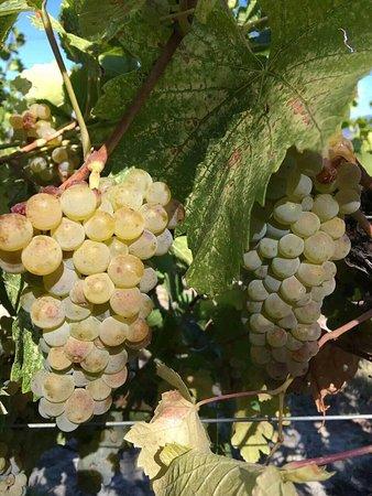 Summerland, Kanada: Sonoran Estate Winery