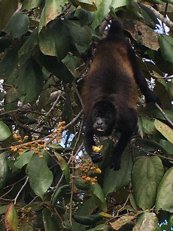 Boca Chica, Panama/Panamá: photo2.jpg