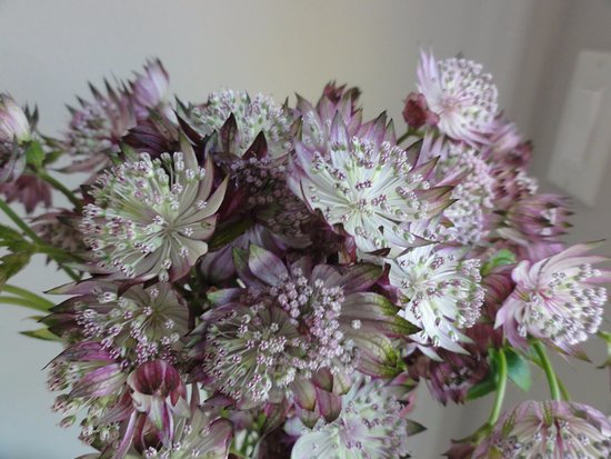 Flower Market: Dainty purple and white blooms