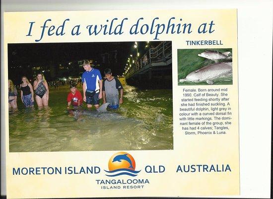 Tangalooma, Australien: My 2 boys hand feeding Tinkerbell