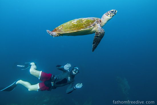 Bunutan, Indonesia: Turtle Power !