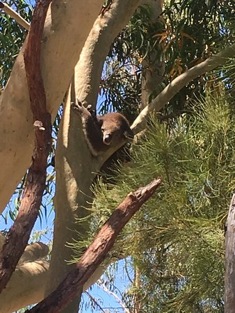 Yanchep, Australia: photo1.jpg