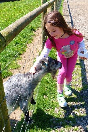 Bolton, UK: petting galore