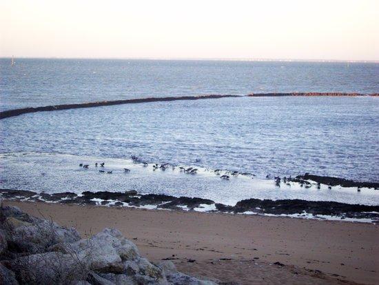 La Bree-les-Bains, France: Écluse à poisson en marée haute