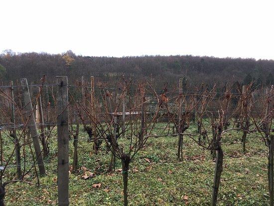 Kutna Hora, Tjekkiet: виноградники