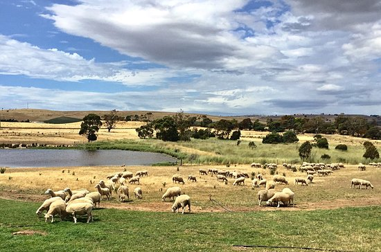 Hamilton, Australia: photo9.jpg